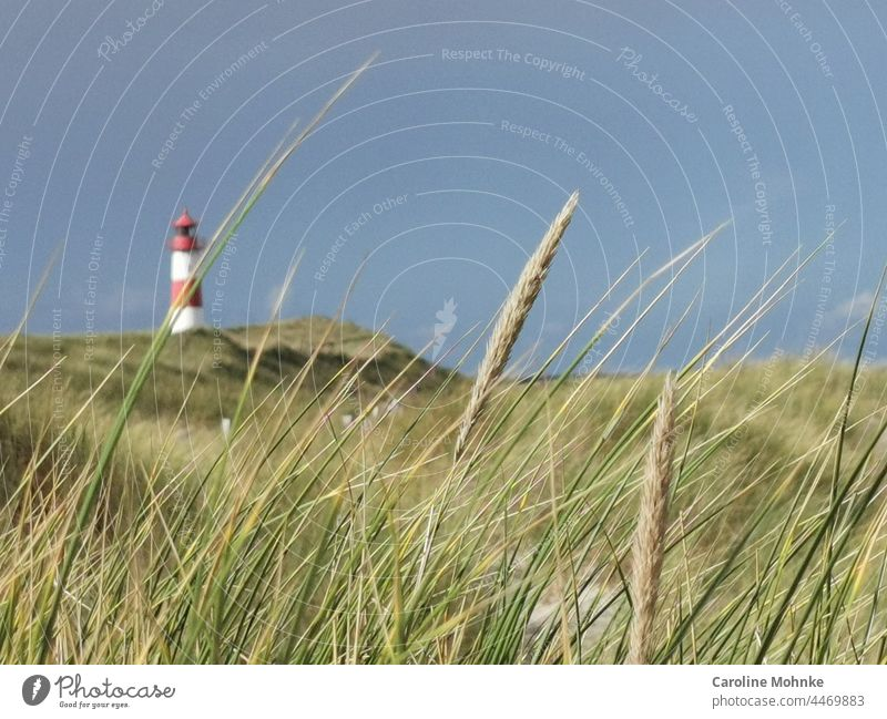 Lighthouse at the beach on Sylt Relaxation Beach Nature Sand Landscape North Sea Red White Germany Frisia Building Schleswig-Holstein Beacon Grass