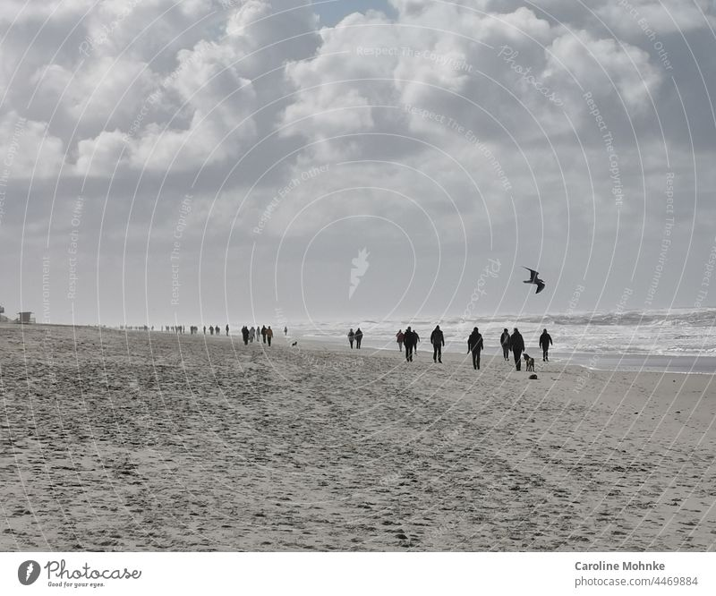 People and dogs walking on the beach on Sylt on a stormy day - A seagull flies in the air Beach Ocean Sand North Sea Vacation & Travel Exterior shot Sky coast