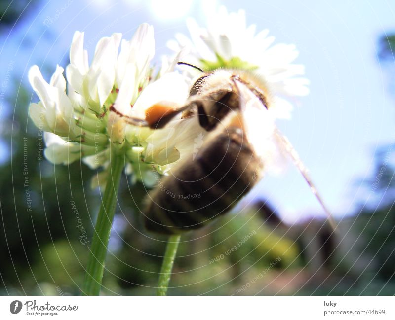 Nature Sun Flower Green Summer Animal Meadow Warmth Transport Fresh Sweet Physics Bee Harvest Daisy Wasps