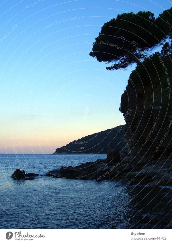 Tree Ocean Rock Island Italy Bay Elba
