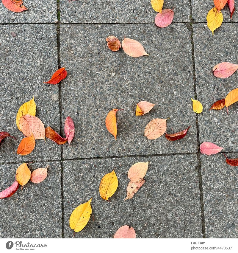 Beginning of autumn - colorful leaves on the asphalt Autumn Leaf foliage Autumn leaves Autumnal colours Early fall Nature Seasons Transience Autumnal weather