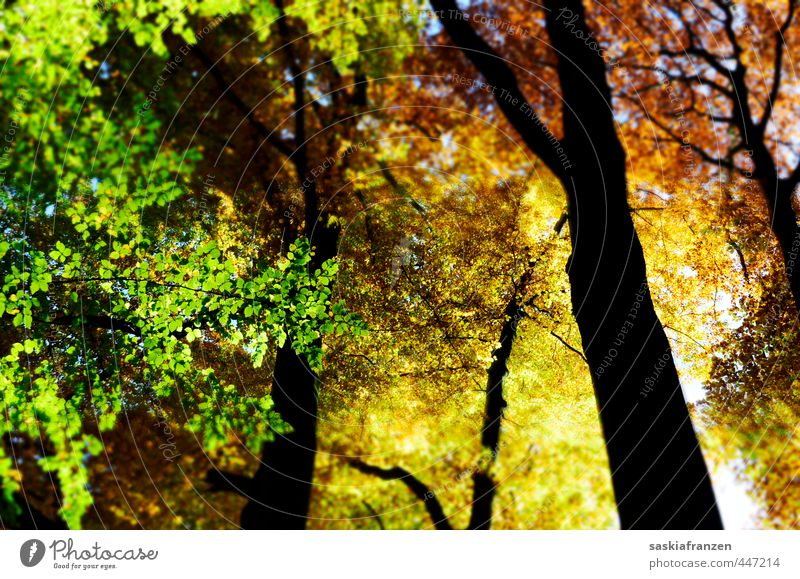 autumn colours Environment Nature Landscape Plant Sky Solar eclipse Autumn Beautiful weather Tree Blossom Forest Wood Esthetic Glittering Infinity Tall Natural