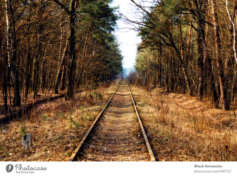 Where are you going? Forest Coniferous trees Railroad tracks Vacation & Travel Beautiful weather Poland To go for a walk