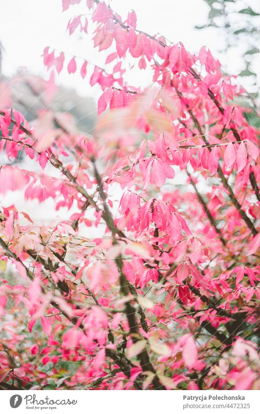 Autumn tree with pink leaves, soft delicate nature Tree Pink fall Nature Forest closeup Soft Delicate