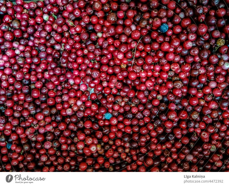 Cranberries cranberry cranberries food background healthy red organic vegetarian raw fresh natural nature delicious ingredient vitamin