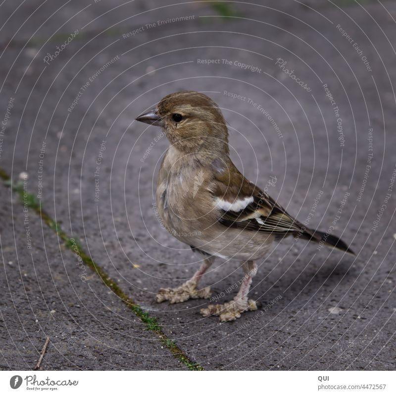 Bird with scarred feet on stone floor Animal Stone low-contrast Sparrow Wild bird compassion observantly Wild animal Stone floor near name Small Bird Feet