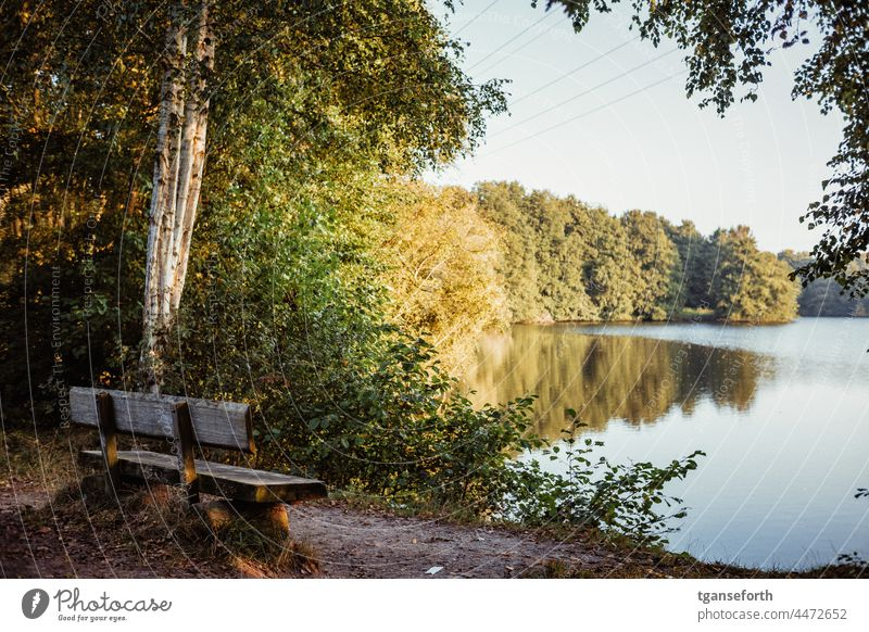 Park bench by the lake in the morning Lake Morning late summer late summerly Reflection in the water reflection Bench Seating tranquillity Calm Colour photo