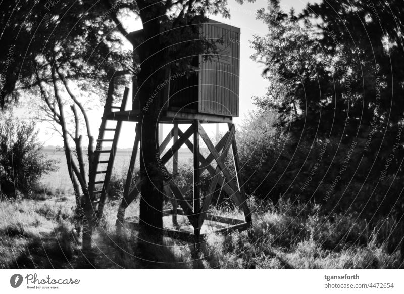 raised hide Hunting Hunting Blind Landscape Exterior shot Deserted Beautiful weather Hunting grounds Forest Hunting lookout Tree Hunter Light and shadow