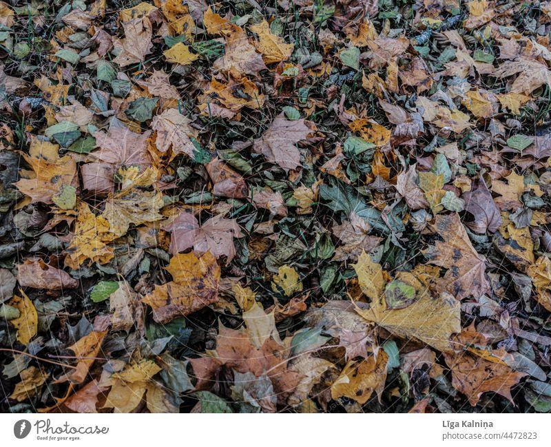 Fullframe of Autumn leaves Leaves Autumnal colours Leaf autumn mood Exterior shot Colour photo foliage background Environment Autumnal weather Nature textured