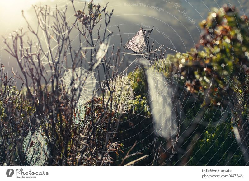 Spider2 Environment Nature Landscape Plant Animal Sun Sunrise Sunset Sunlight Tree Grass Bushes Wild plant Forest Virgin forest Dew Spider's web Colour photo