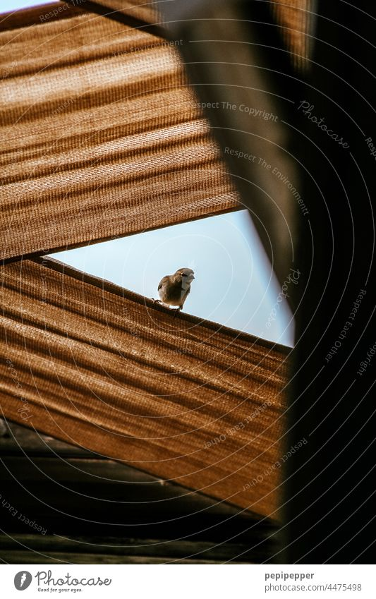Bird looking down from a fabric covered terrace Bird's-eye view birdwatching Animal Exterior shot Nature Colour photo Wild animal Animal portrait Animal face
