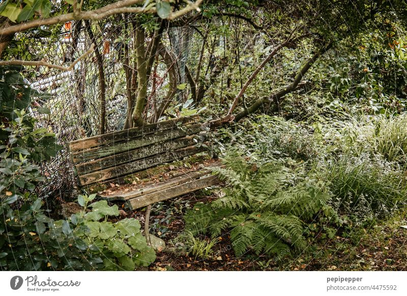 """Transience - old wooden bench in a park overgrown with green plants transient Transience"""" Nature Colour photo Exterior shot Plant Detail old bench Bench"""