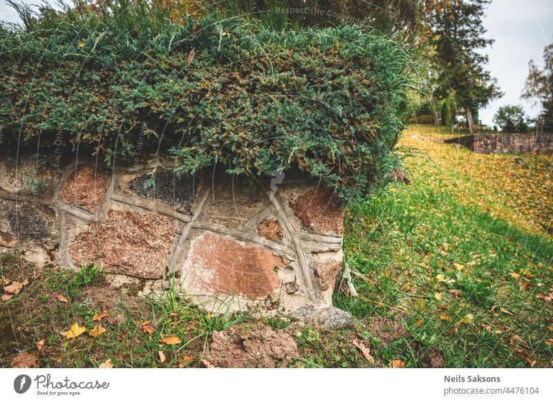 granite stone wall with juniper bushes in Latvian country cemetery abandoned ancient architecture autumn background beautiful blue building color countryside