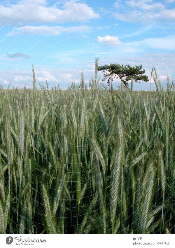 Sky Tree Summer Clouds Loneliness Meadow Moody Field Bushes Grain Doomed