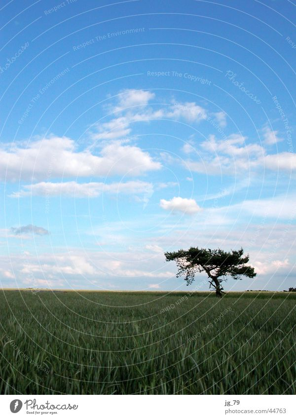 blue sky passes bye Clouds Sky Tree Field Cornfield Loneliness Summer Calm Weather