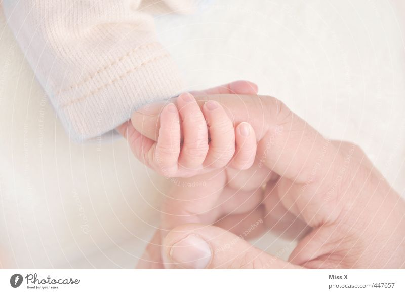 Human being Hand Adults Love Life Emotions Small Happy Friendship Moody Infancy Baby Fingers Cute Warm-heartedness Protection