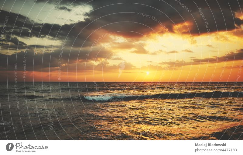Scenic golden sunset over the sea. ocean sunrise nature scenic water travel surf dawn dusk sunlight background dramatic vacation landscape waves serenity summer