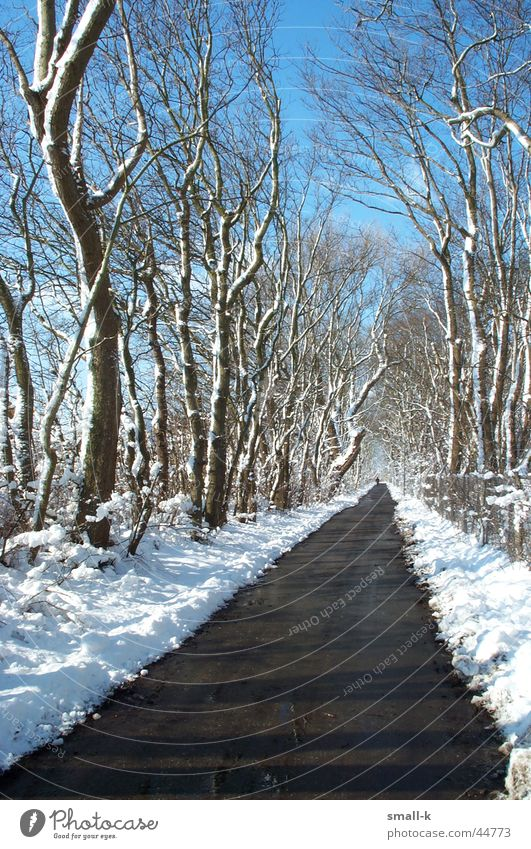 Winter wonderland Tree Avenue Cold Lanes & trails Snow Sky
