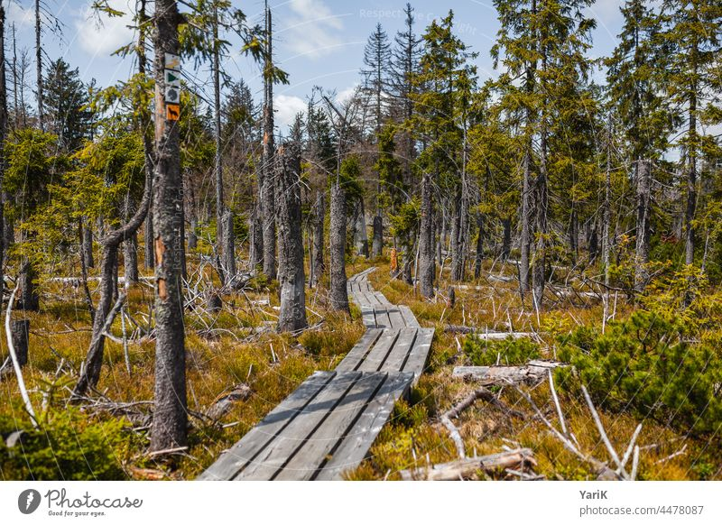 Please stay on the path off Footbridge Nature reserve Bog Moss Bavarian Forest Hiking hiking area Forest death Bark-beetle spruces Grass Brown Autumn Spring