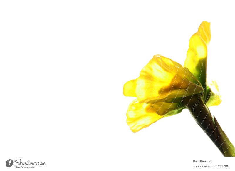 flower Flower Long exposure White Yellow Beautiful Sunflower Background picture Bright Division Contrast