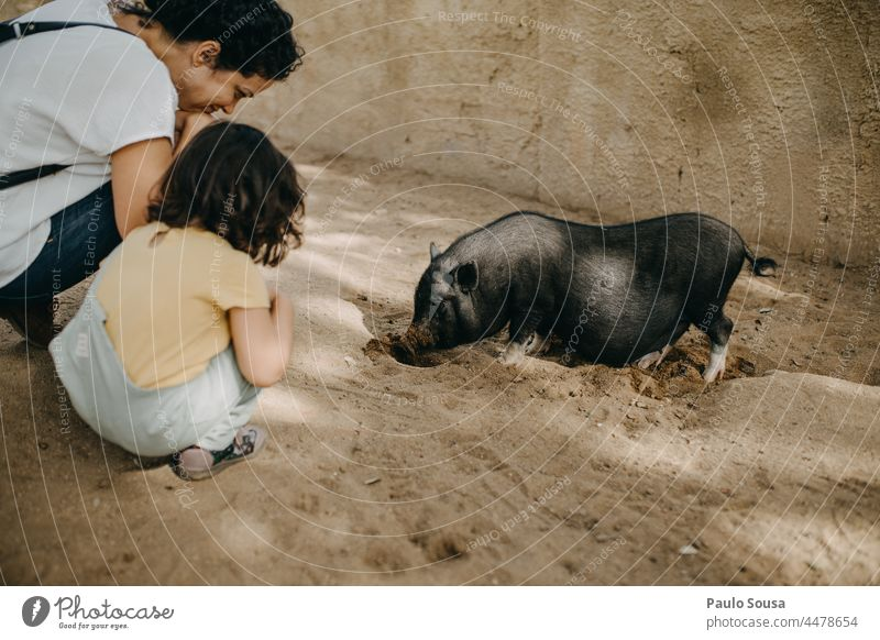 Mother and Daughter watching little pig Mother with child Child Caucasian 1 - 3 years Leisure and hobbies Love Love of animals Together togetherness Farm
