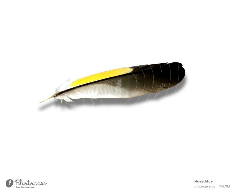 Transport Feather