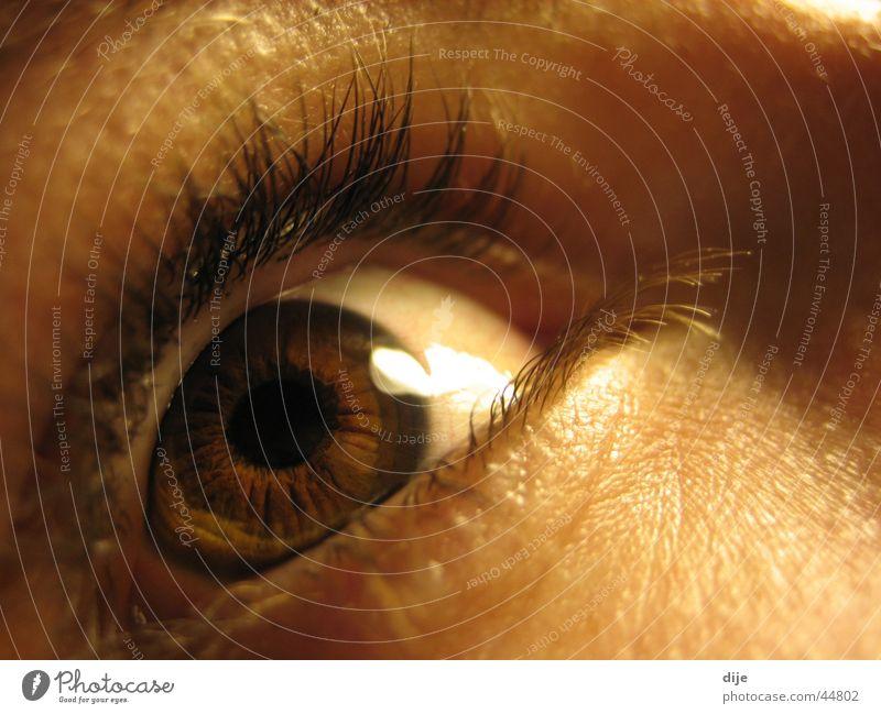 Woman Human being Eyes Brown Eyelash Roe deer Pupil Iris