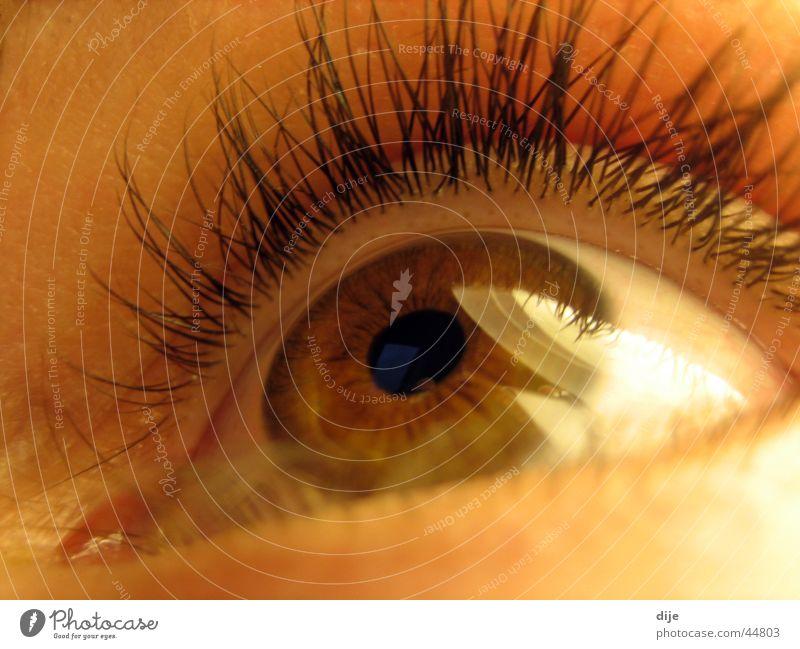 Deer brown with lamp Pupil Eyelash Brown Roe deer Woman Looking Eyes Human being Macro (Extreme close-up) Iris