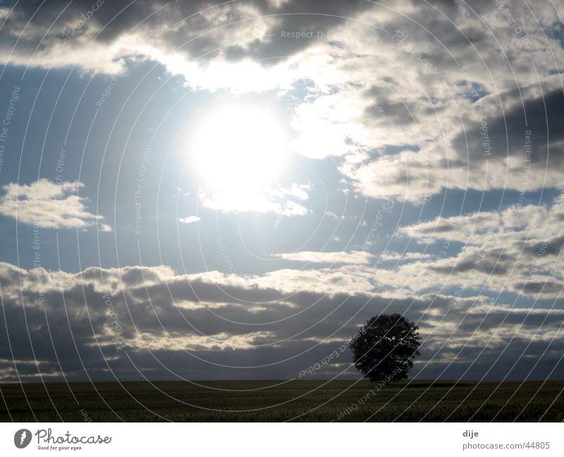 A tree alone in the barley field Clouds Field Tree Barley Barleyfield Sun Loneliness
