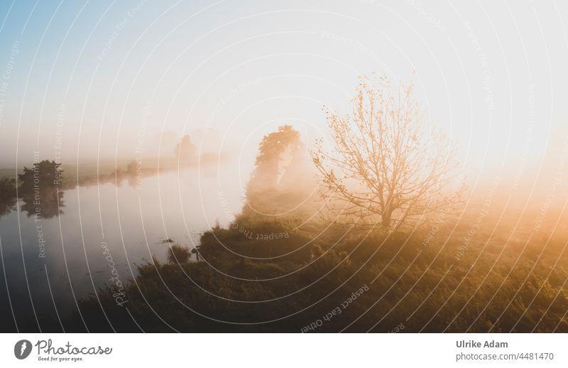 UT Teufelsmoor 2021 - Good morning sunshine Dawn Sunlight Bog Landscape Exterior shot Grief mourning card romantic travel Nature reserve Deserted Colour photo