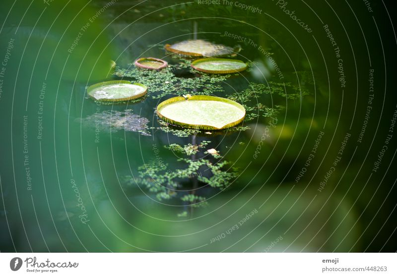landing site Environment Nature Plant Bushes Leaf Foliage plant Exotic Pond Natural Green Water lily leaf Colour photo Exterior shot Detail Deserted Day