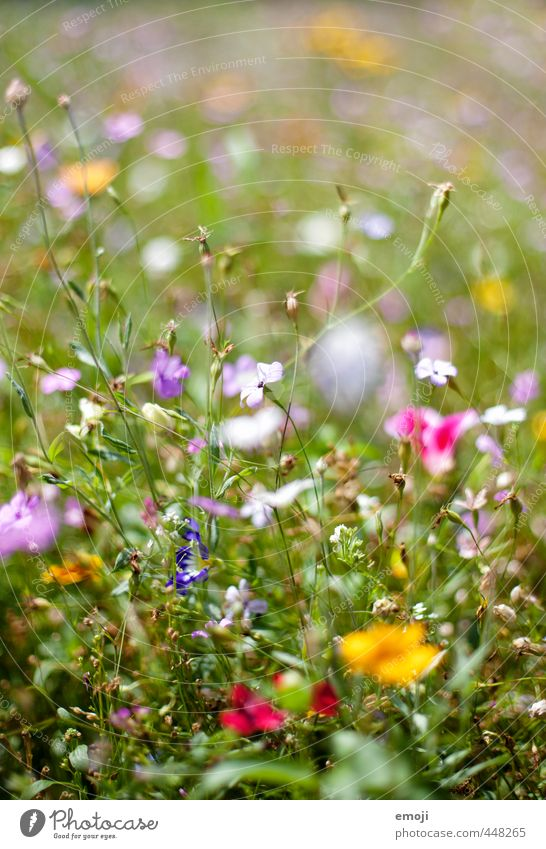 meadow Environment Nature Plant Summer Flower Grass Garden Park Meadow Natural Green Colour photo Multicoloured Exterior shot Close-up Macro (Extreme close-up)