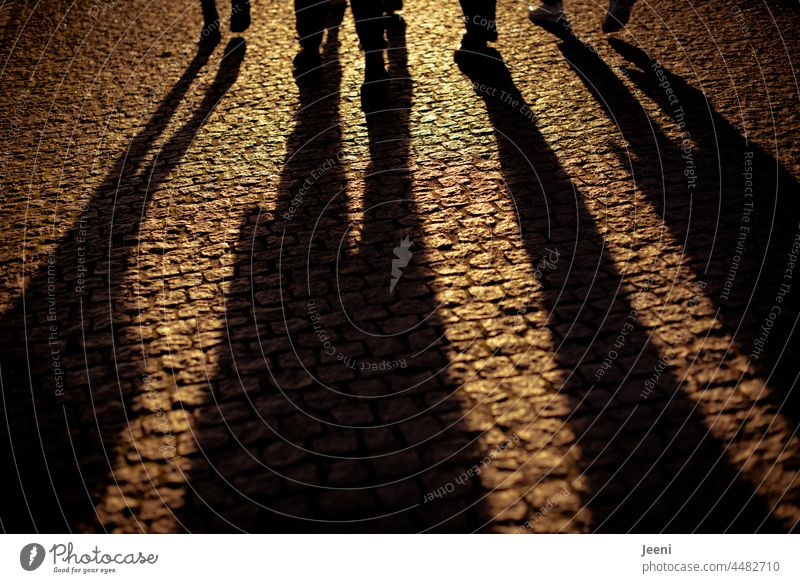 Friendships with long shadows people five Five friends Group group Man Woman Adults Lifestyle Joy youthful Happy Together Leisure and hobbies fun muck about