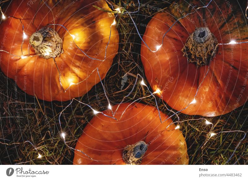 Pumpkins decorated with garland lights, view fromm above, autumn holidays decoration pumpkins orange background thanksgiving halloween party decorations hay