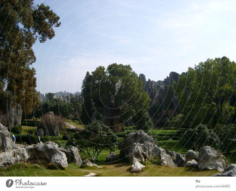 Tree Vacation & Travel Meadow Mountain Park Rock China