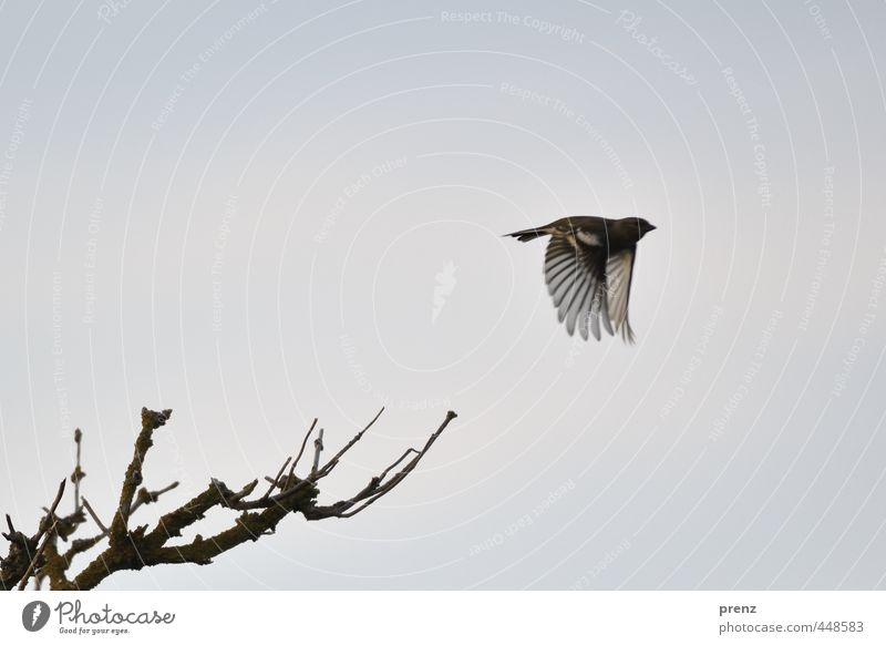 Nature Blue Animal Environment Gray Bird Flying Wild animal Beautiful weather Twig Floating Finch