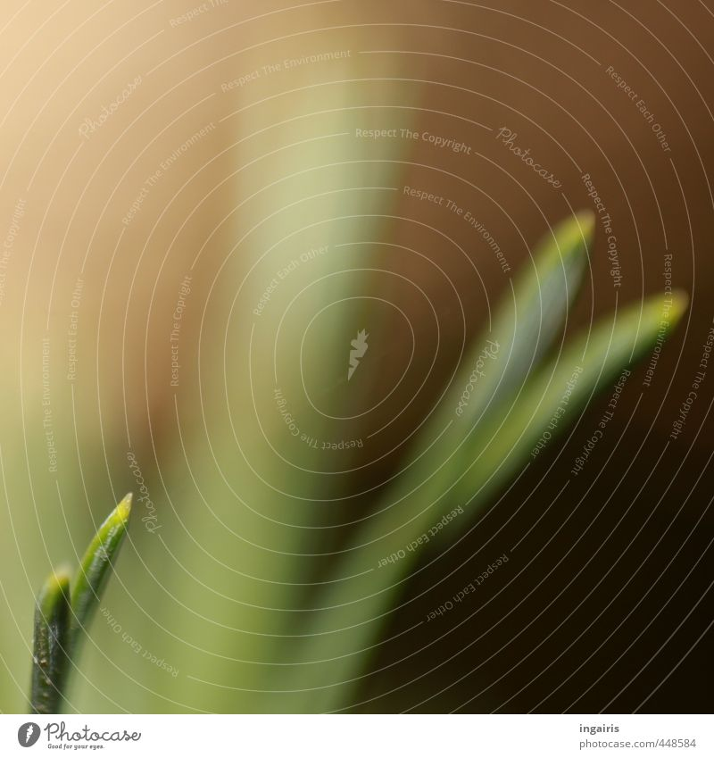 small grass blade Plant Grass Blade of grass Growth Simple Small Warmth Brown Green Movement Moody Light green Delicate Fine Subdued colour Close-up Detail