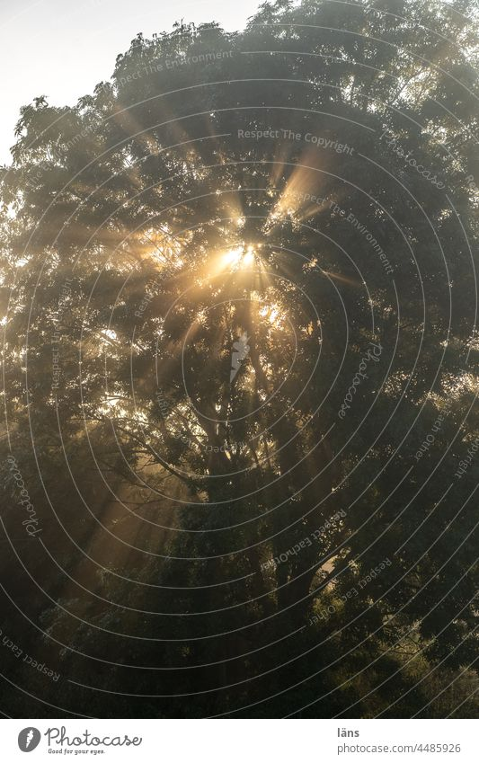 UT Teufelsmoor l Sunbeams shine through tree Sunrise Tree devil's mire Worpswede Deserted Sunlight Dawn Exterior shot Bog Morning