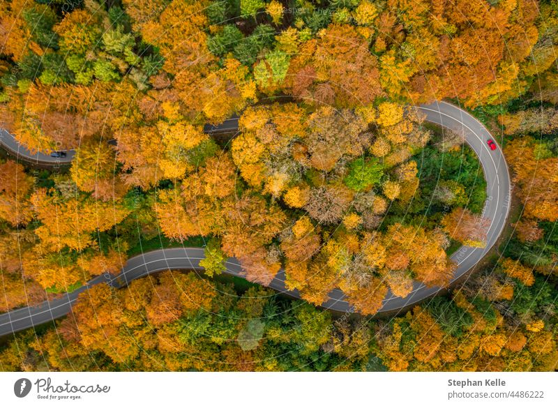 Having a trip in the autumn season, driving by car through the wonderful foliage. Top down shot by a drone. road tight red street top down above fall colors