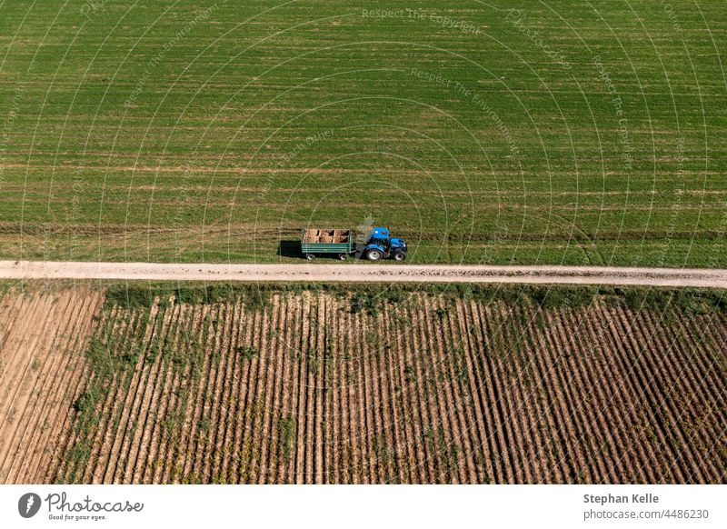 Aerial view at a potatoe harvesting tractor, with lots of potatoes stacked up. vegetable food organic agriculture fresh raw farm plant nature farming crop