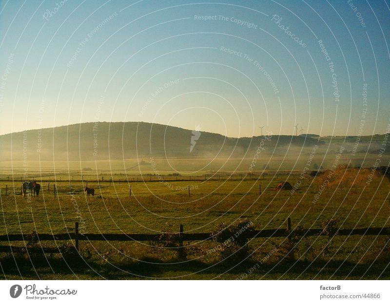Calm Meadow Landscape Fog Rhineland-Palatinate Eifel