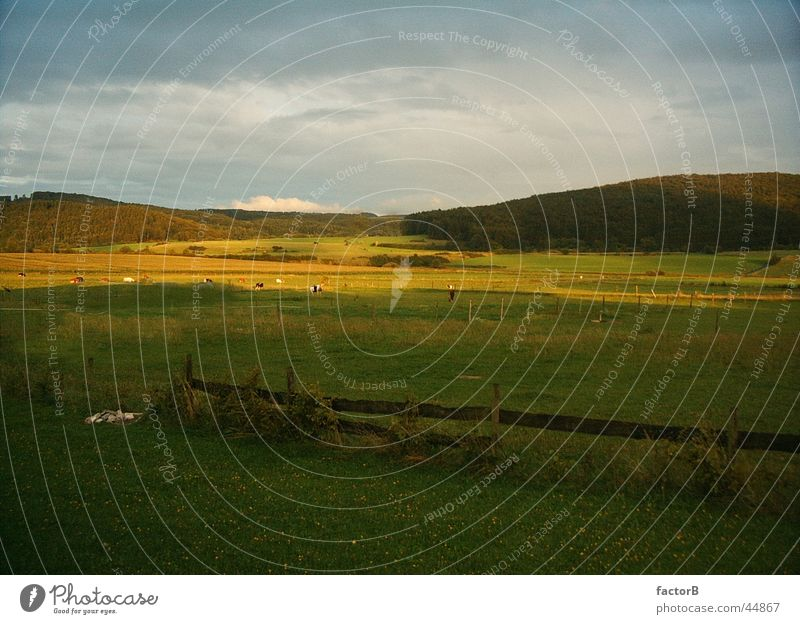 Evening sun in the Eifel region Summer Meadow Field Calm Loneliness Landscape