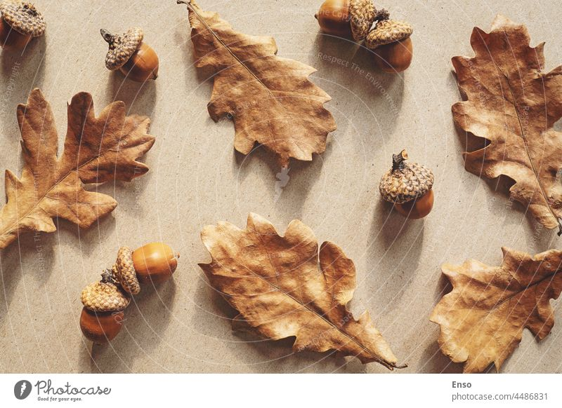 Autumn nature flat lay with brown oak leaves and acorns autumn background craft paper shadow pattern fall leaf design season color plant abstract foliage
