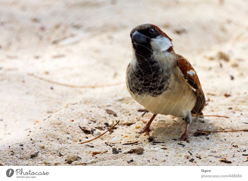 black eye in sand belle mare mauritius Vacation & Travel Trip Nature Animal Sand Coast Bird Line Dirty Brown Yellow Gray Black White sparrow Feather plumage