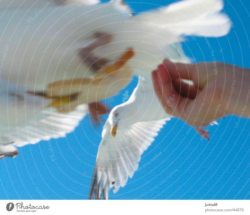 Hand Sky Ocean Seagull Feeding