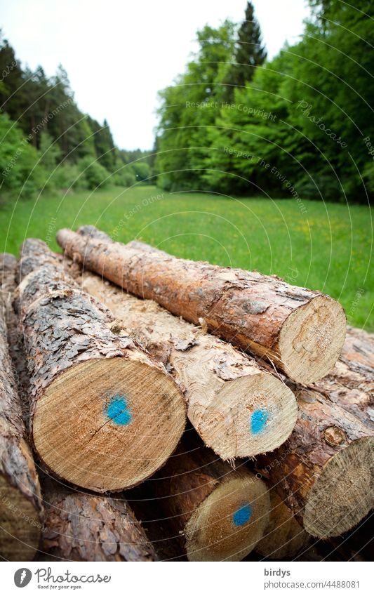 Coniferous wood, timber Roundwood, on a polder in a clearing in the forest coniferous Timber round wood Polder Stack stacked Forest Clearing Stored Forestry