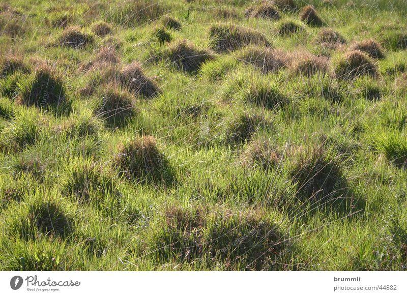 Nature Green Meadow Dwarf Bog Habitat Tuft of grass Country art