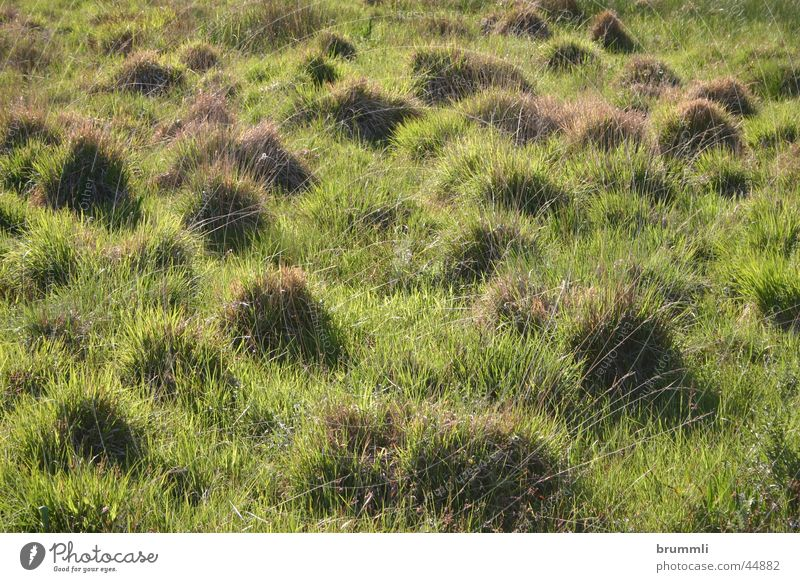 Nature Green Meadow Dwarf Bog Habitat Tuft of grass Country art