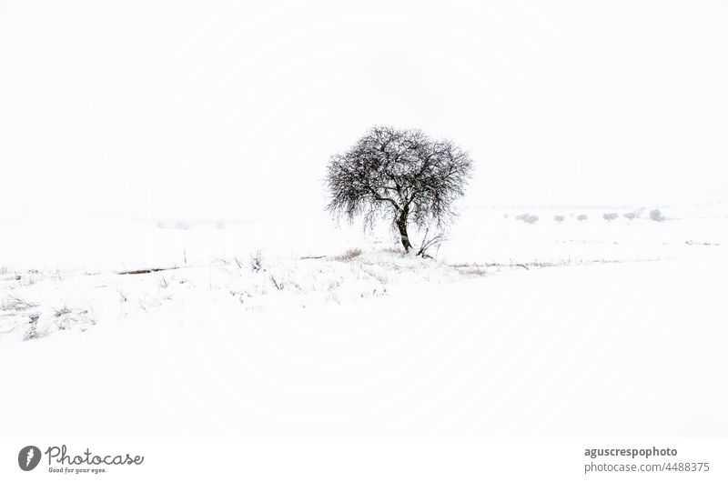 Snowy footprint showing a lone leafless tree with a blanket of snow in front, at its feet and in the background, where silhouettes of more distant trees can be seen. With an overcast white sky.
