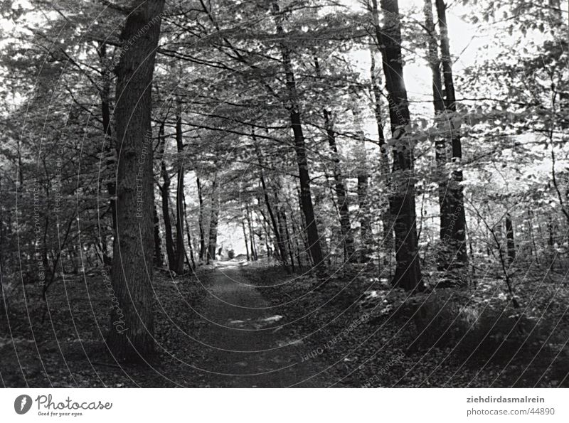 walk in the woods Forest Avenue Tree Black White Gray scale value Nature Black & white photo Lanes & trails